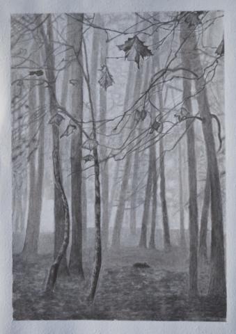 narava, oglje, 2015
