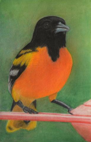 živali, mehki pastel, 2015